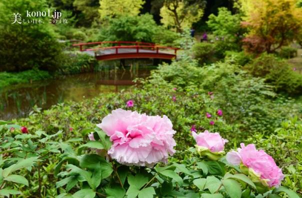つくば牡丹園 茨城県つくば市 牡丹 芍薬 日本一