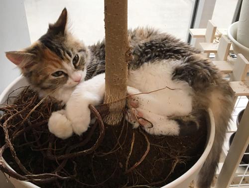 観葉植物をイタズラする猫