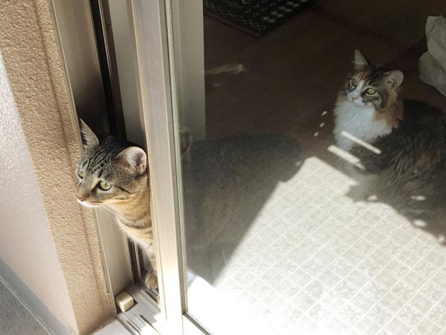 ベランダを覗く猫