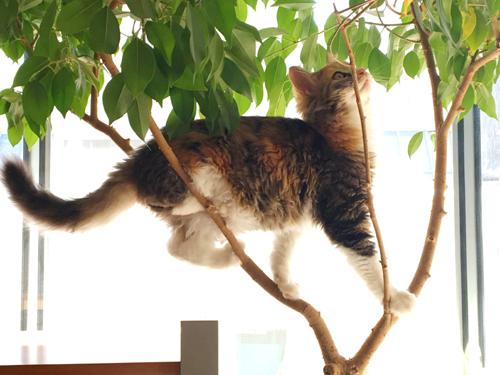 観葉植物で木登りをする猫