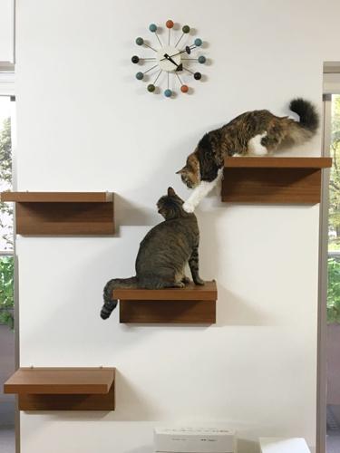 キャットステップと猫