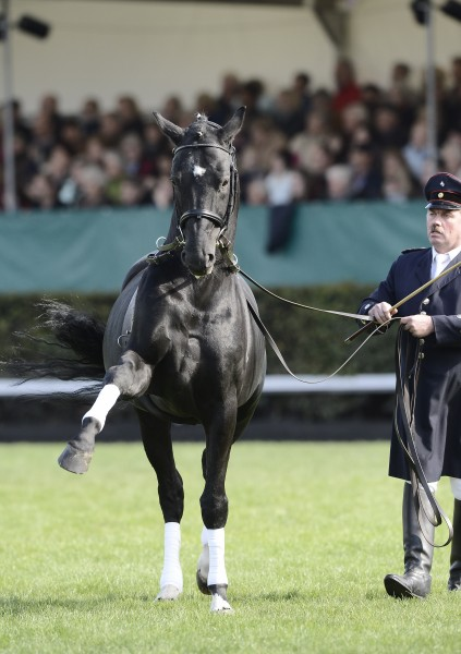 Jenis Jenis Kuda Di Dunia : jenis, dunia, Hannover., Hannover, Breed, Horses, Horse