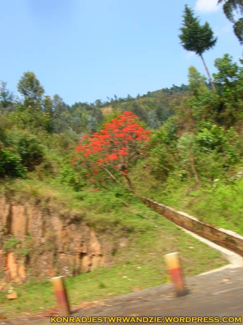 Zaczyna się pora deszczowa i Rwanda staje się coraz bardziej kolorowa
