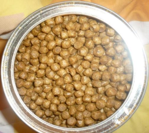Причины по которым коты перестают есть сухой корм