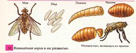 Paraziți de cânepă schmid la insectele sociale, Transcript