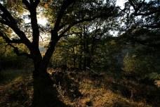 bosque, Mastorojoria, Grecia