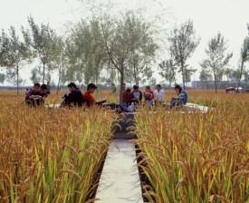 Designed Ecologies - The Landscape Architecture of Kongjian Yu
