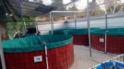 kolam terpal diameter 3 meter