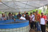 komunitas peternak lele jombang