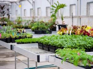 Horticulture-_Plants
