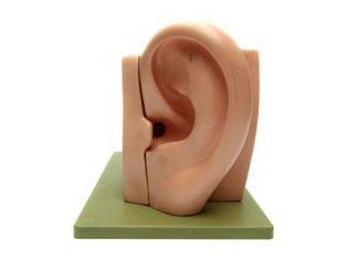 hukum tindik telinga bagi laki-laki