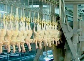 mesin penyembelih hewan