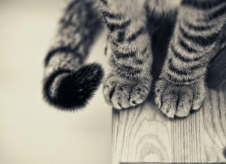 hukum kencing dan kotoran kucing
