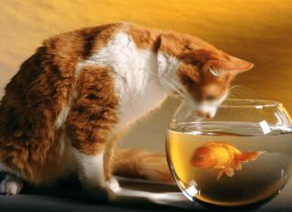 hukum anjing menjilati kolam yang ada ikannya