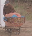 Productor y transporador de uchuva