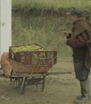 Productor y transportador de uchuva