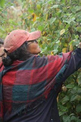 Productora de uchuva (Ventaquemada, Boyaca)