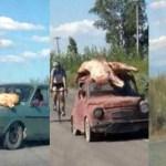 La Argentina del Hambre: vecinos saquean en San Juan camión y se llevan 20 mil kilos de carne con desesperación