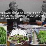 Denuncian desde EEUU el negociado de Gerardo Morales con plantaciones de cannabis