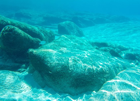 Underwater photo of Cretan sea