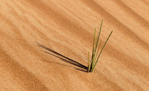 A piece of grass growing from the desert