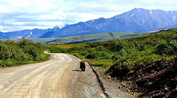 Photo diary: Denali National Park