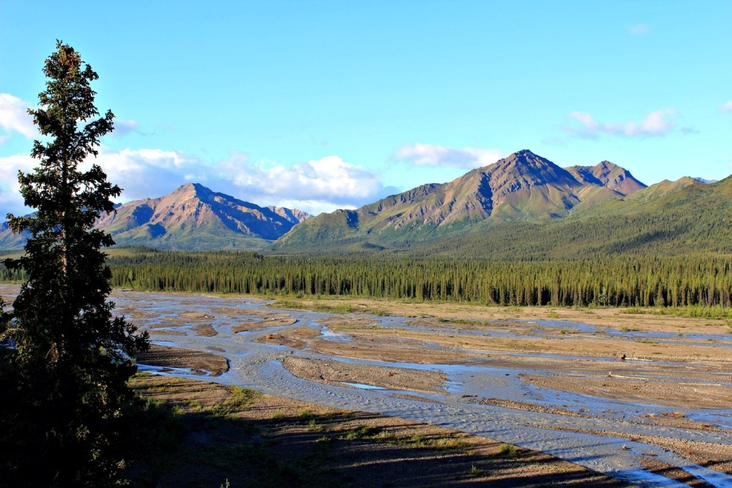 Denali National Park: wetlands and forest in front of the Alaska Range