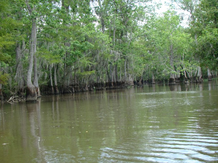 Trees in the swamp have watermarks, showing water levels have dropped.