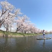 福岡堰でお花見SUP