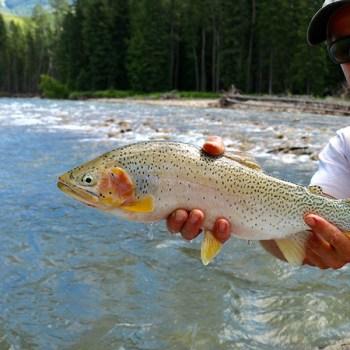 fernie guided fishing trips