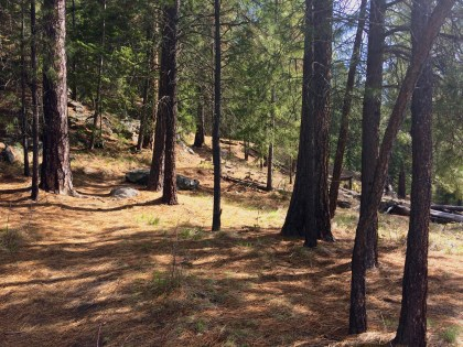 Forest views along the Syringa Trail