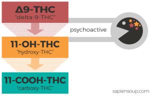Metabolismus delta-9-THC