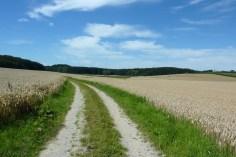 Hartwald bei Tegernbach