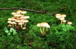 Bonholz ist Pilzland