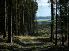 Hin und wieder gibt der Wald Blicke auf das weite Wertachtal frei