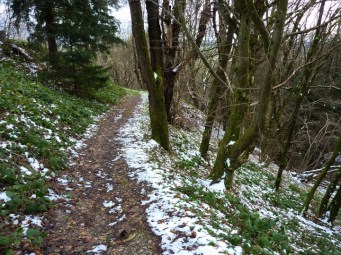 Wanderpfad in den Westlichen Wäldern