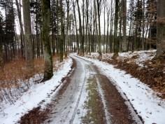 Waldweg beim Anhauser Tal