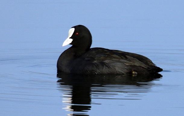 Мор птиц в Херсонской области: стала известна причина