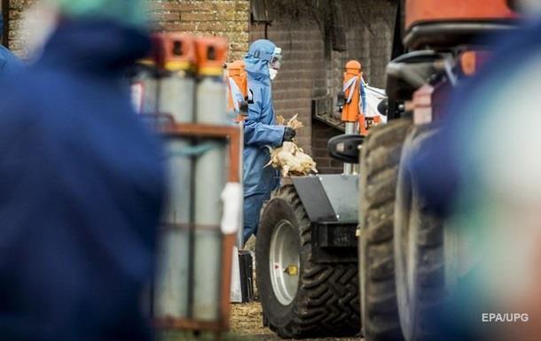 В Британии выявлены новые случаи птичьего гриппа
