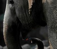 Дикие слоны в Китае убили трех человек