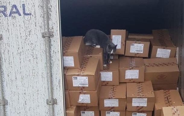 Кіт з України прожив на цукерках три тижні, добираючись до Ізраїлю