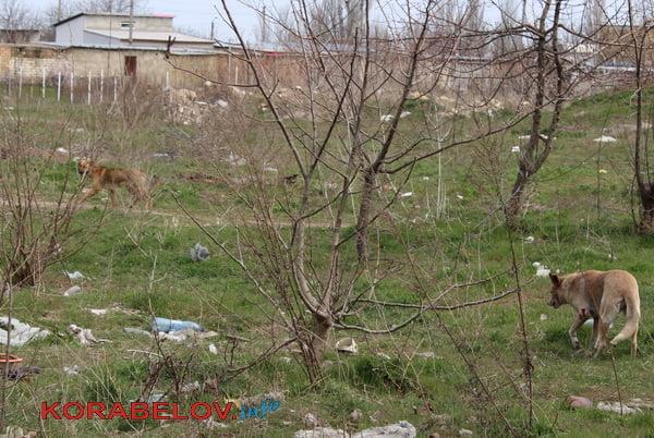 бродячие собаки в Кульбакино