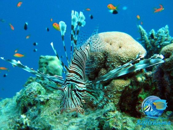 Korallenriff-I