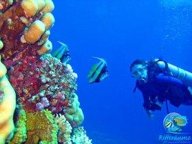 Titelbild-Korallenriff