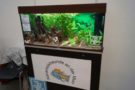 Aquariumfreunde Murr