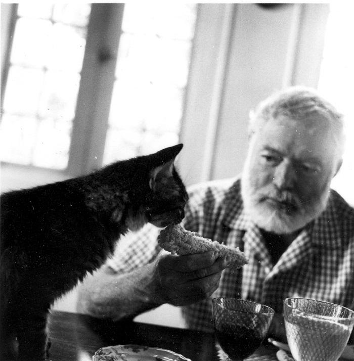 hemingway y gato