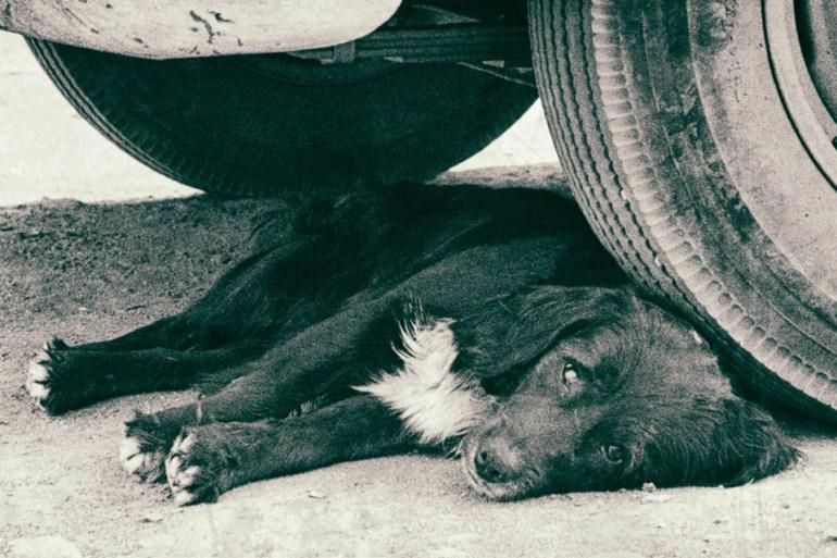 'El día del perro', de Caroline Lamarche