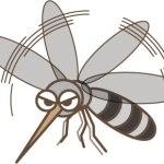 蚊の寿命はどれ位?実は車の中と家の中では大きく違うんです!