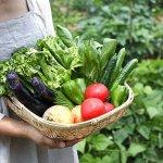 家庭菜園初心者におすすめ!プランターで簡単に栽培できる野菜6選