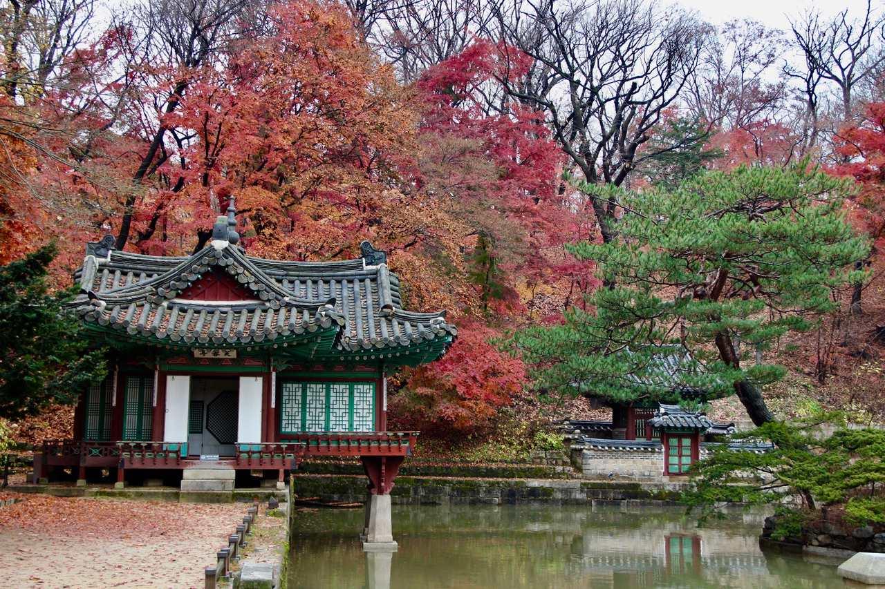 Palaces in Autumn – Gyeongbokgung & Changdeokgung